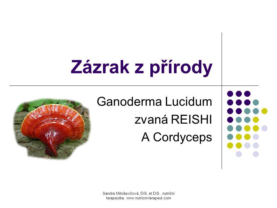 Zázrak z přírody Ganoderma Lucidum zvaná REISHI A Cordyceps Sandra Miloševičová, DiS. et DiS., nutriční terapeutka, www.nutricni-terapeut.com