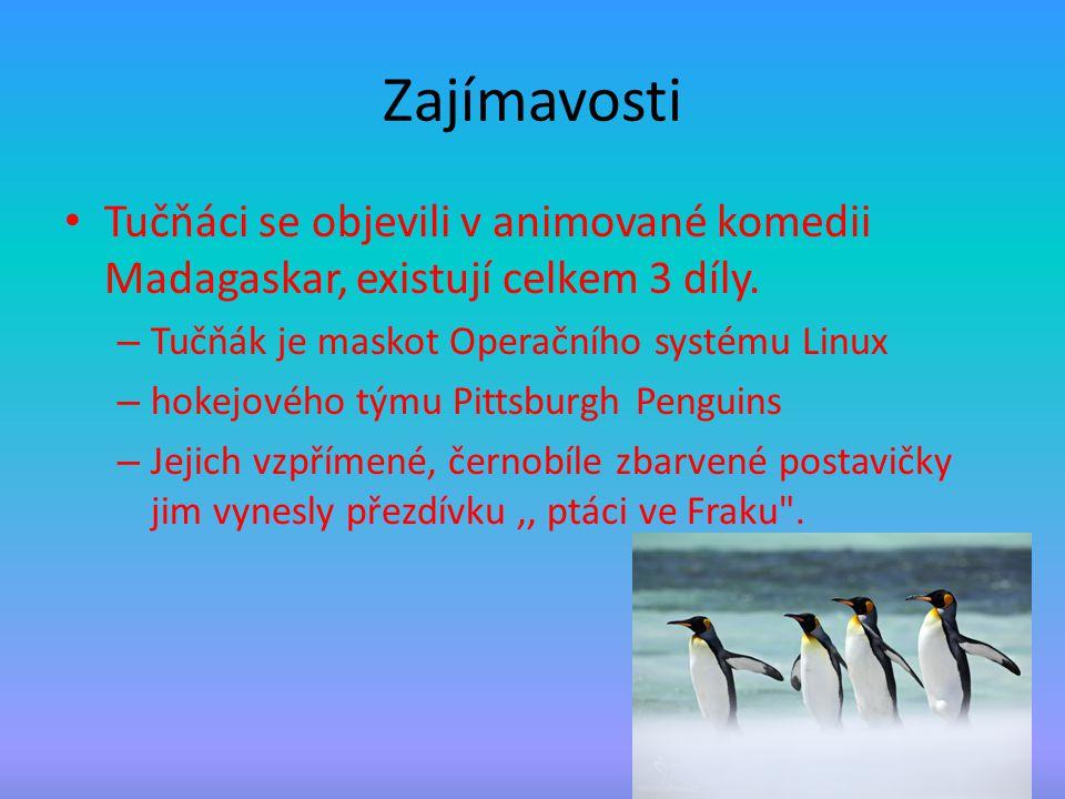 Zajímavosti Tučňáci se objevili v animované komedii Madagaskar, existují celkem 3 díly. – Tučňák je maskot Operačního systému Linux – hokejového týmu