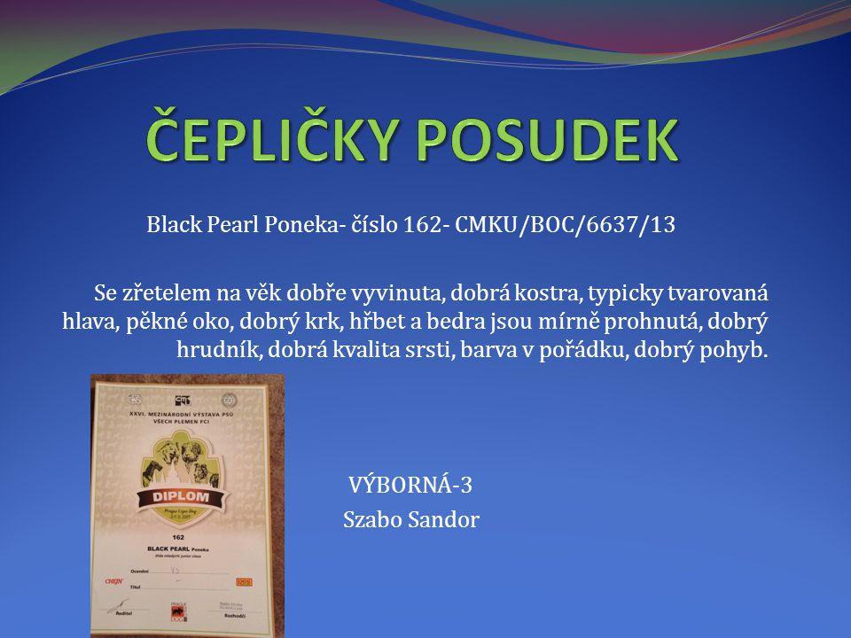 Black Pearl Poneka- číslo 162- CMKU/BOC/6637/13 Se zřetelem na věk dobře vyvinuta, dobrá kostra, typicky tvarovaná hlava, pěkné oko, dobrý krk, hřbet a bedra jsou mírně prohnutá, dobrý hrudník, dobrá kvalita srsti, barva v pořádku, dobrý pohyb.