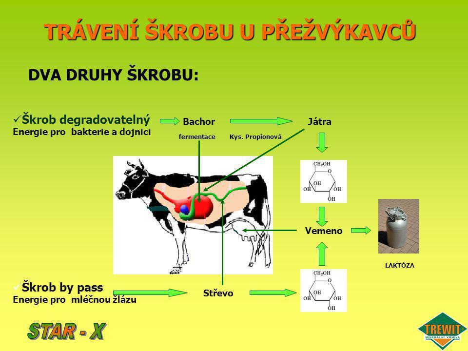 Doba po nakrmení Bachorové pH STAR-X u výkrmu skotu: vliv na bachorové pH Krmná dávka kukuřičná siláž + seno + koncentrát