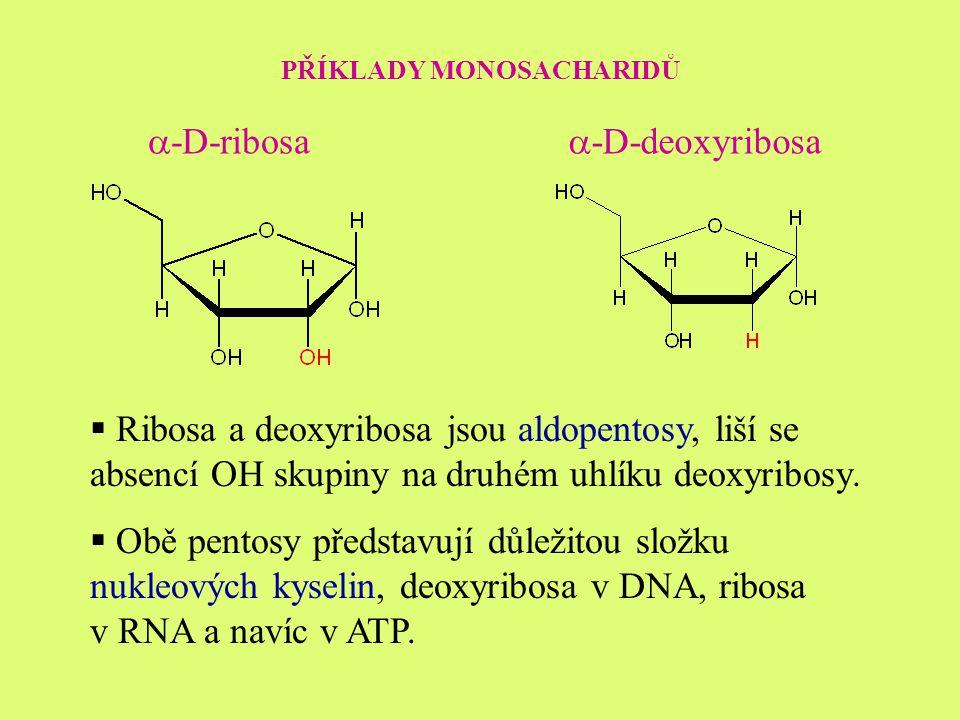 PŘÍKLADY MONOSACHARIDŮ  -D-ribosa  -D-deoxyribosa  Ribosa a deoxyribosa jsou aldopentosy, liší se absencí OH skupiny na druhém uhlíku deoxyribosy.
