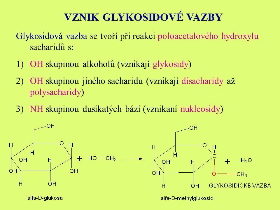 VZNIK GLYKOSIDOVÉ VAZBY Glykosidová vazba se tvoří při reakci poloacetalového hydroxylu sacharidů s: 1)OH skupinou alkoholů (vznikají glykosidy) 2)OH skupinou jiného sacharidu (vznikají disacharidy až polysacharidy) 3)NH skupinou dusíkatých bází (vznikaní nukleosidy)