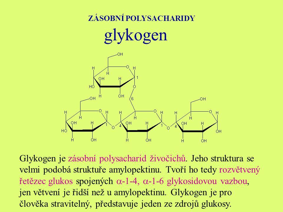 ZÁSOBNÍ POLYSACHARIDY glykogen Glykogen je zásobní polysacharid živočichů.