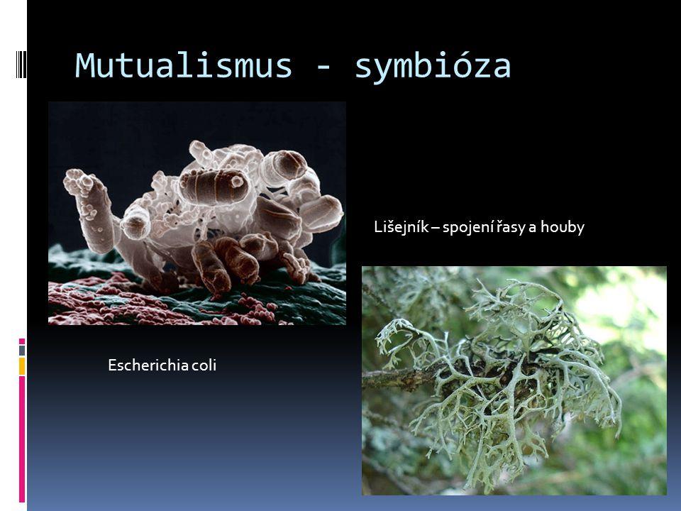 Mutualismus - symbióza Escherichia coli Lišejník – spojení řasy a houby