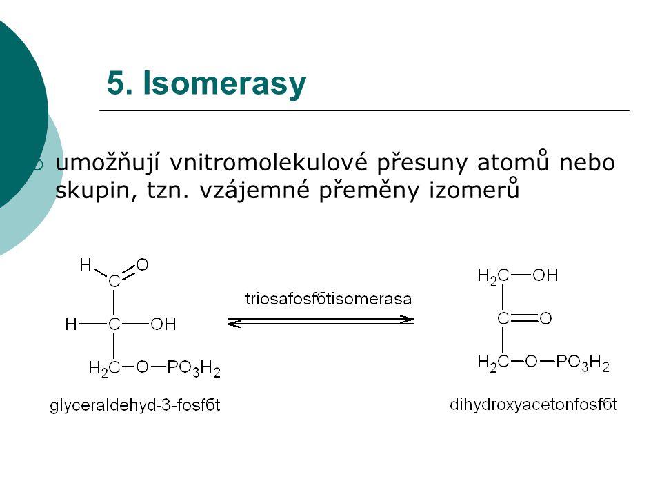 5. Isomerasy  umožňují vnitromolekulové přesuny atomů nebo skupin, tzn. vzájemné přeměny izomerů
