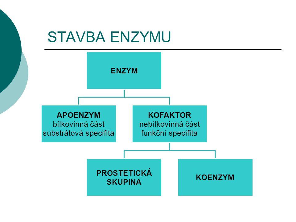 STAVBA ENZYMU ENZYM APOENZYM bílkovinná část substrátová specifita KOFAKTOR nebílkovinná část funkční specifita PROSTETICKÁ SKUPINA KOENZYM