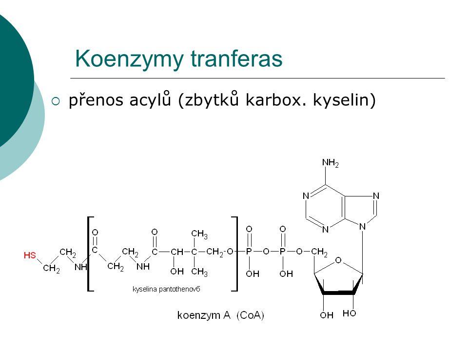 Koenzymy tranferas  přenos acylů (zbytků karbox. kyselin)