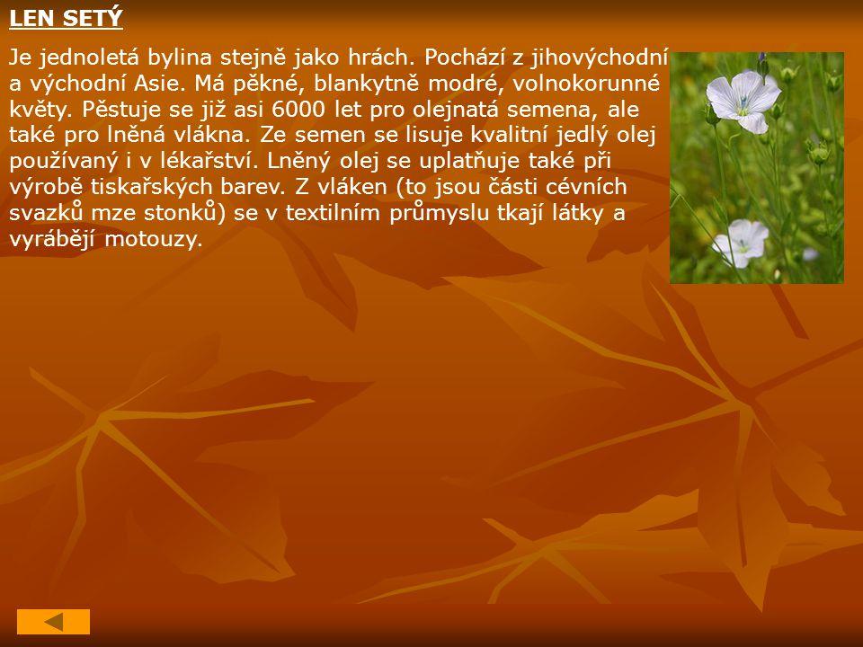 LEN SETÝ Je jednoletá bylina stejně jako hrách. Pochází z jihovýchodní a východní Asie. Má pěkné, blankytně modré, volnokorunné květy. Pěstuje se již