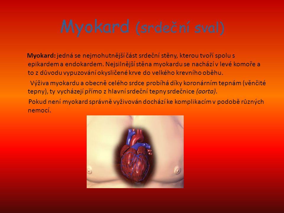 Myokard (srdeční sval) Myokard: jedná se nejmohutnější část srdeční stěny, kterou tvoří spolu s epikardem a endokardem. Nejsilnější stěna myokardu se