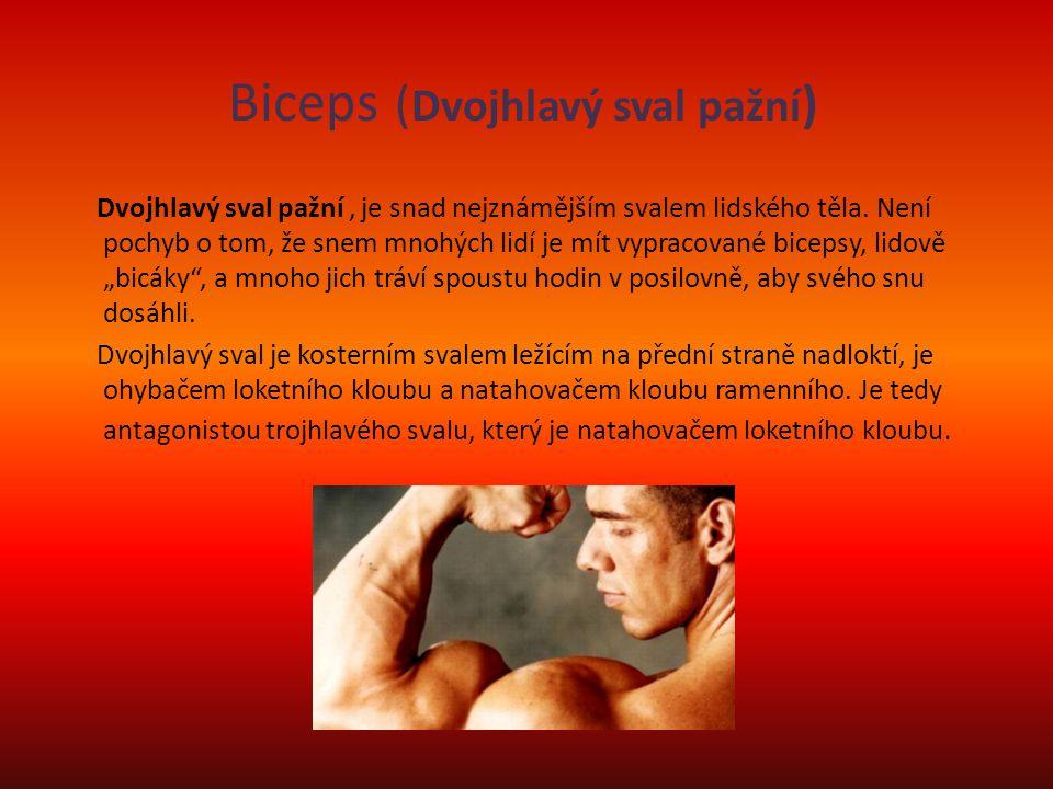 Biceps ( Dvojhlavý sval pažní ) Dvojhlavý sval pažní, je snad nejznámějším svalem lidského těla. Není pochyb o tom, že snem mnohých lidí je mít vyprac