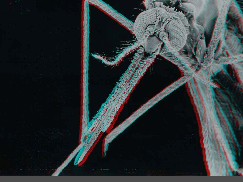 moskit