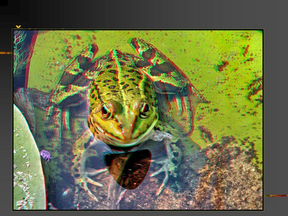 Žába 2