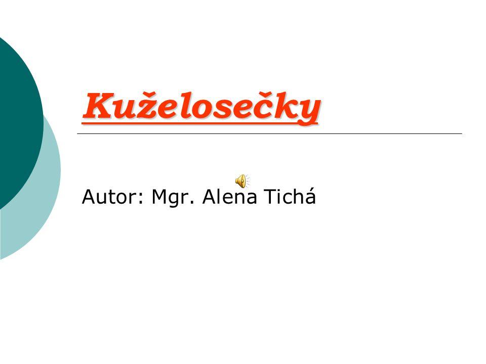 Kuželosečky Autor: Mgr. Alena Tichá