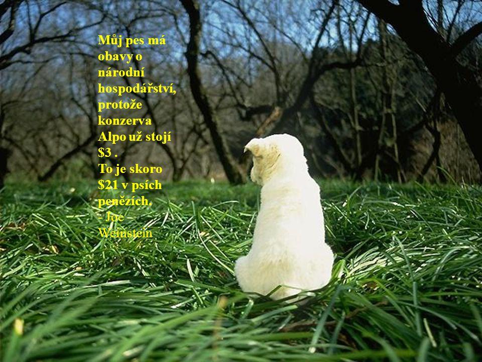 Pokud mám nějakou víru v nesmrtelnost, tak je to že všichni psi co znám přijdou do nebe, a jenom velice, velice málo lidí.