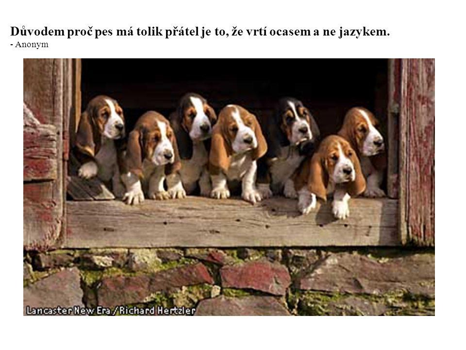 Psi milují své přátele a koušou své nepřátele, na rozdíl od lidí, kteří nejsou schopni čisté lásky a vždy míchají dohromady lásku a nenávist.