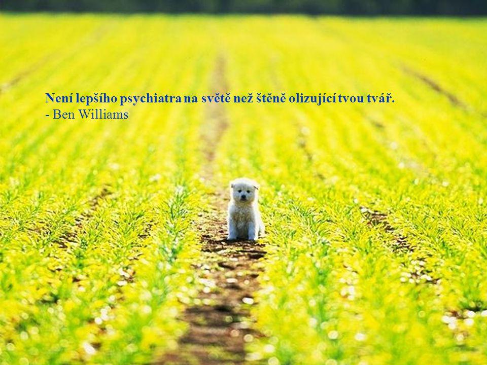 Není lepšího psychiatra na světě než štěně olizující tvou tvář. - Ben Williams