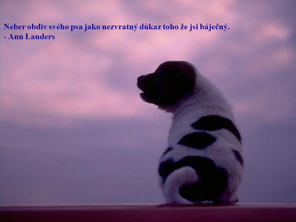 Neber obdiv svého psa jako nezvratný důkaz toho že jsi báječný. - Ann Landers