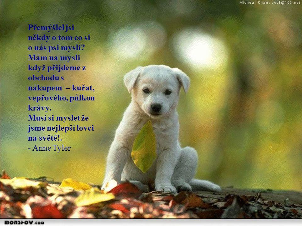 Chtěla bych se dovědět, jestli ostatní psi si myslí že pudlové jsou členové nějakého podivného náboženského kultu...