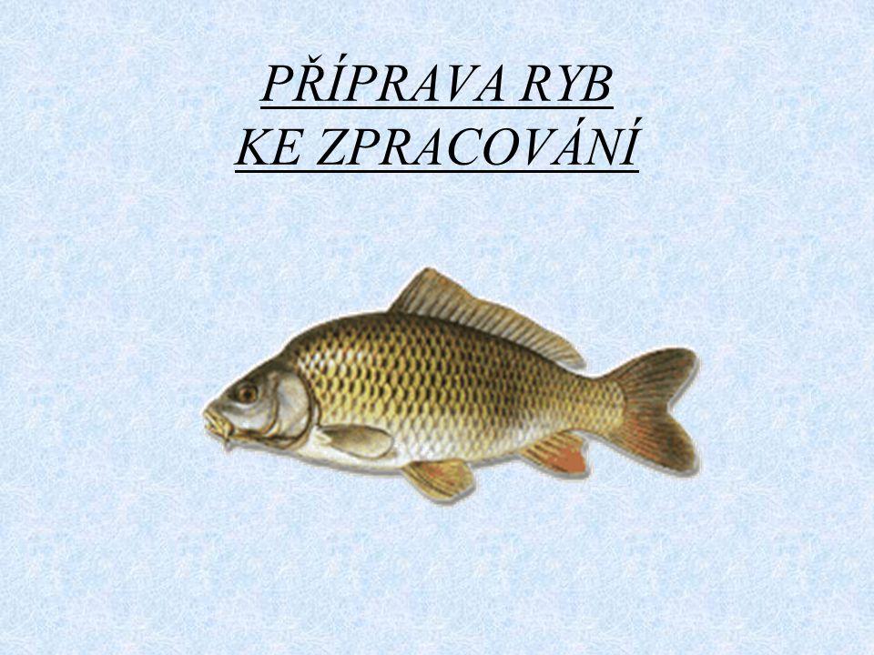 Porcování dravých ryb - candát Odborně zfiletovaný candát - zbytky u páteře jsou minimální.