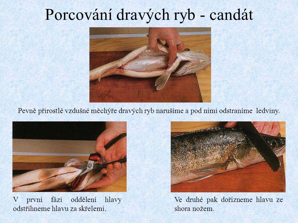 Porcování dravých ryb - candát Pevně přirostlé vzdušné měchýře dravých ryb narušíme a pod nimi odstraníme ledviny. V první fázi oddělení hlavy odstříh