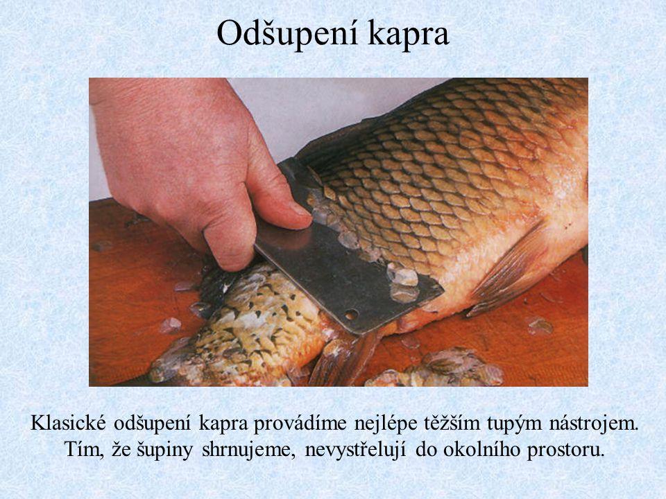 Porcování ryb - tolstolobik U tolstolobika odstraníme tučnou část břicha.