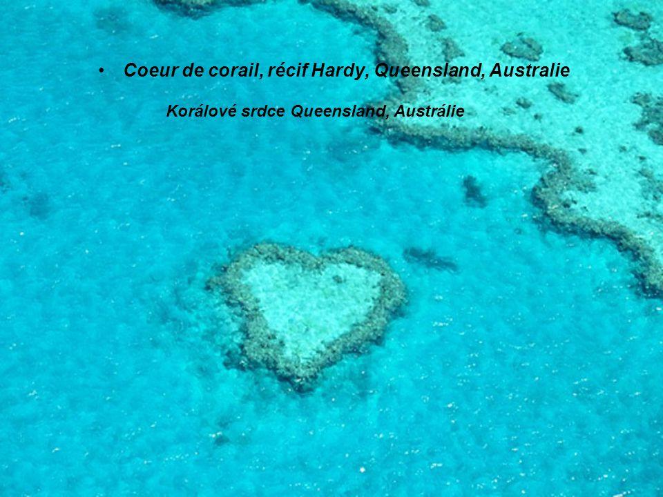 Coeur de corail, récif Hardy, Queensland, Australie Korálové srdce Queensland, Austrálie