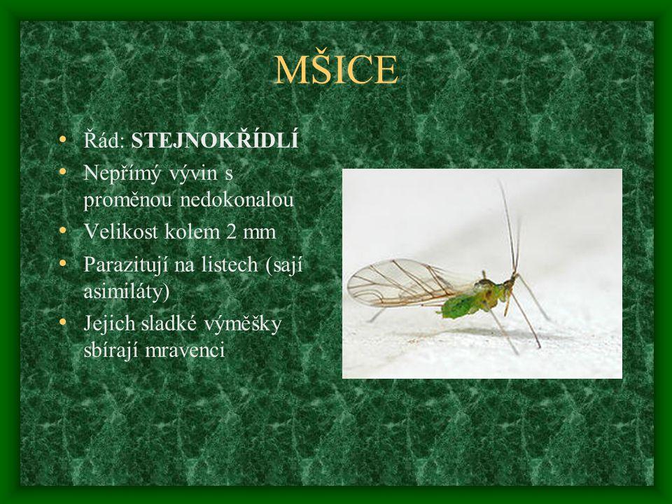 MŠICE Řád: STEJNOKŘÍDLÍ Nepřímý vývin s proměnou nedokonalou Velikost kolem 2 mm Parazitují na listech (sají asimiláty) Jejich sladké výměšky sbírají mravenci
