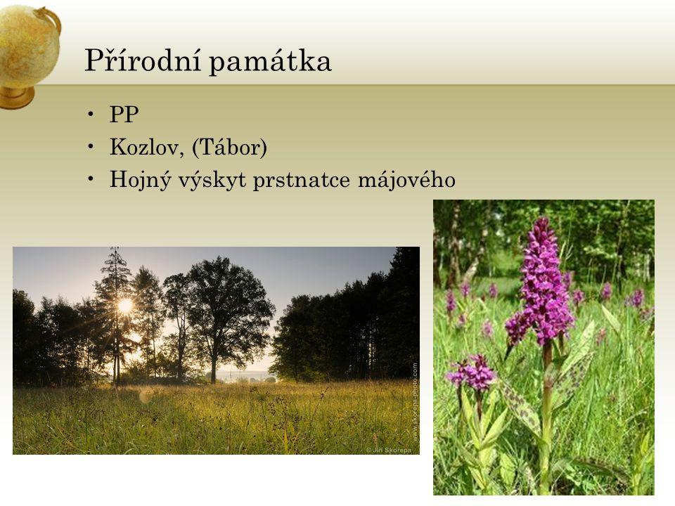 Přírodní památka PP Kozlov, (Tábor) Hojný výskyt prstnatce májového