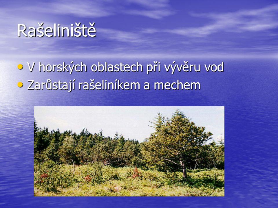 Rašeliniště V horských oblastech při vývěru vod V horských oblastech při vývěru vod Zarůstají rašeliníkem a mechem Zarůstají rašeliníkem a mechem
