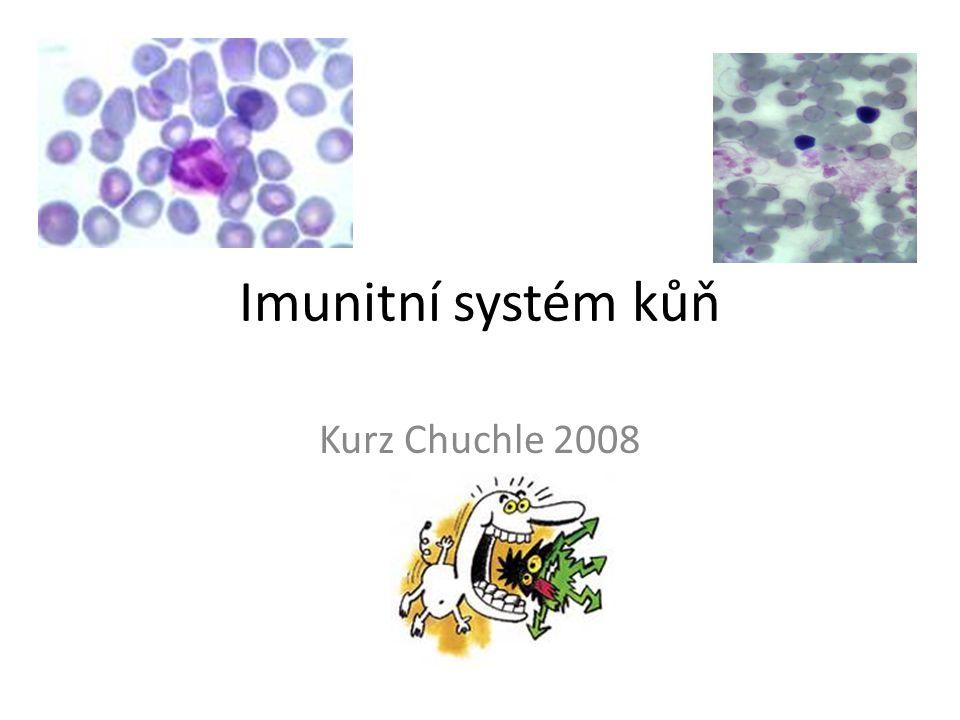 Imunitní systém (IMS) kůň IMUNITA = schopnost organismu chránit se před patogeny (bakterie,viry,houby,prvoci ) Udržuje homeostázu organismu (společně s endokrinním a nervovým systémem) Propojení mezi výše jmenovanými systémy Odstraňování nefunkčních nebo cizích složek organismu Složení – molekuly, buňky, lymfatické orgány, lymfatický systém