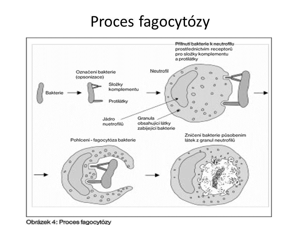 Proces fagocytózy