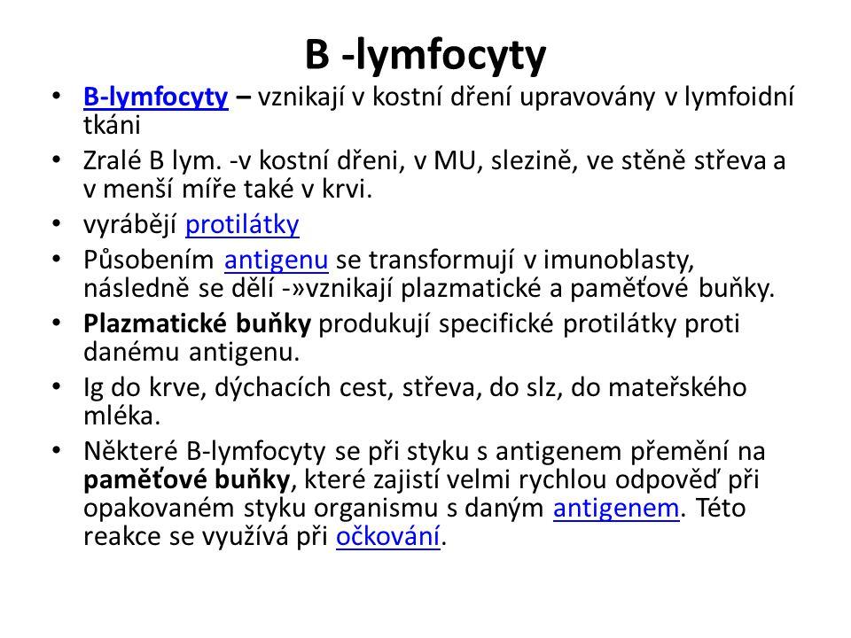B -lymfocyty B-lymfocyty – vznikají v kostní dření upravovány v lymfoidní tkáni B-lymfocyty Zralé B lym.
