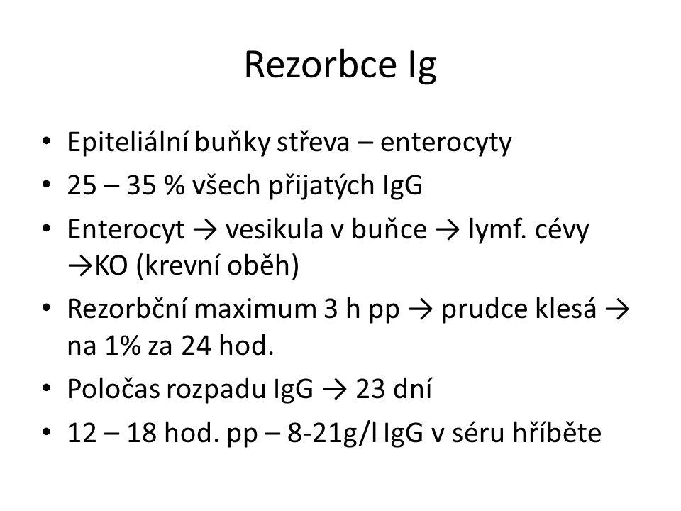 Rezorbce Ig Epiteliální buňky střeva – enterocyty 25 – 35 % všech přijatých IgG Enterocyt → vesikula v buňce → lymf.