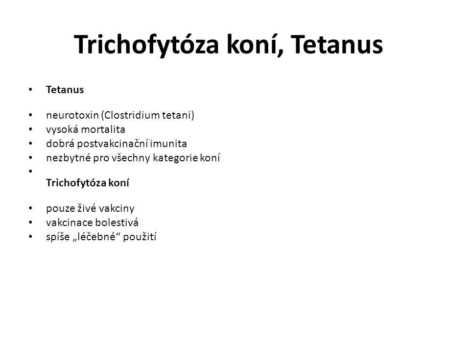 """Trichofytóza koní, Tetanus Tetanus neurotoxin (Clostridium tetani) vysoká mortalita dobrá postvakcinační imunita nezbytné pro všechny kategorie koní Trichofytóza koní pouze živé vakciny vakcinace bolestivá spíše """"léčebné použití"""