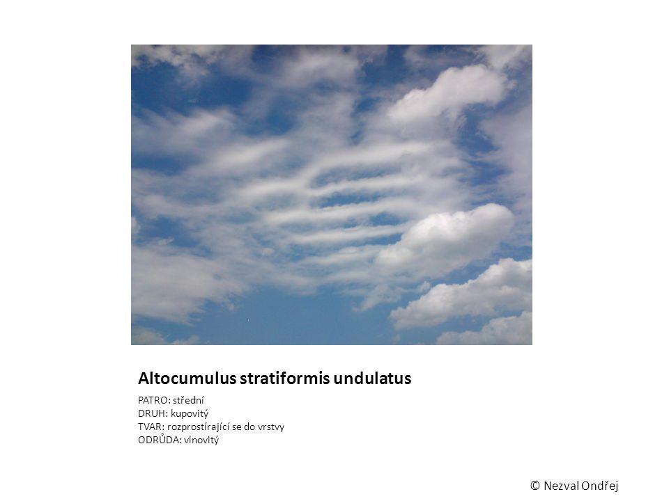 Altocumulus stratiformis undulatus PATRO: střední DRUH: kupovitý TVAR: rozprostírající se do vrstvy ODRŮDA: vlnovitý © Nezval Ondřej