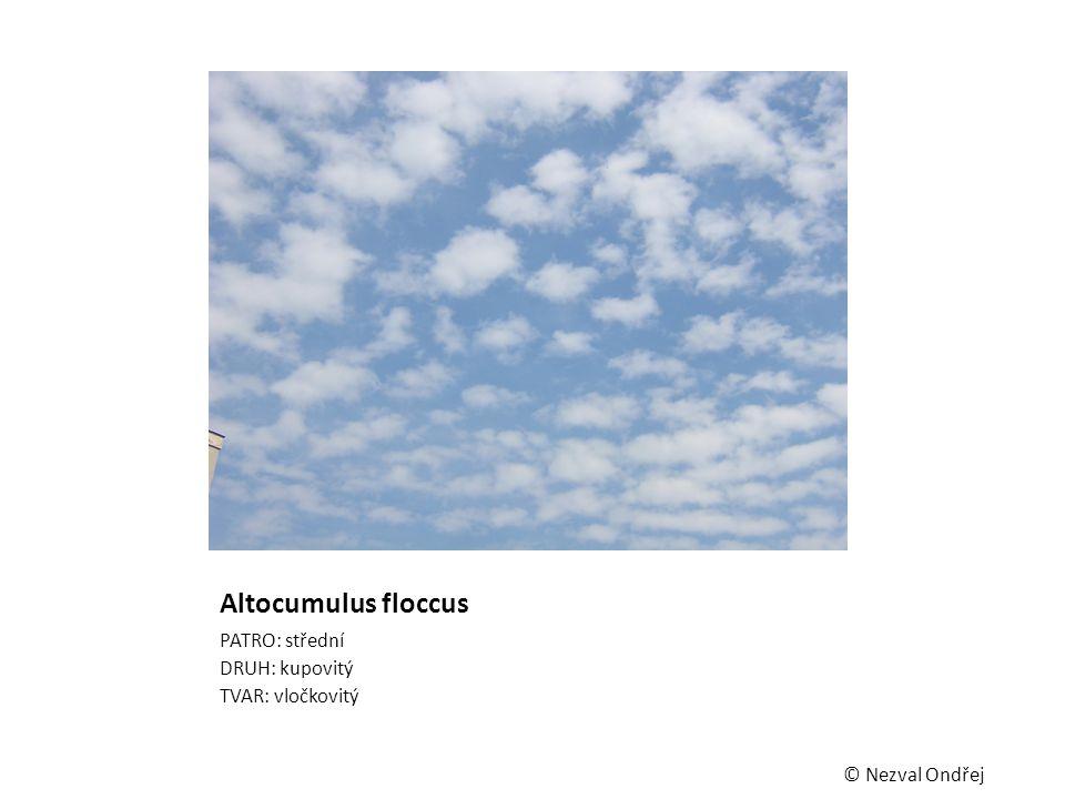 Altocumulus floccus PATRO: střední DRUH: kupovitý TVAR: vločkovitý © Nezval Ondřej