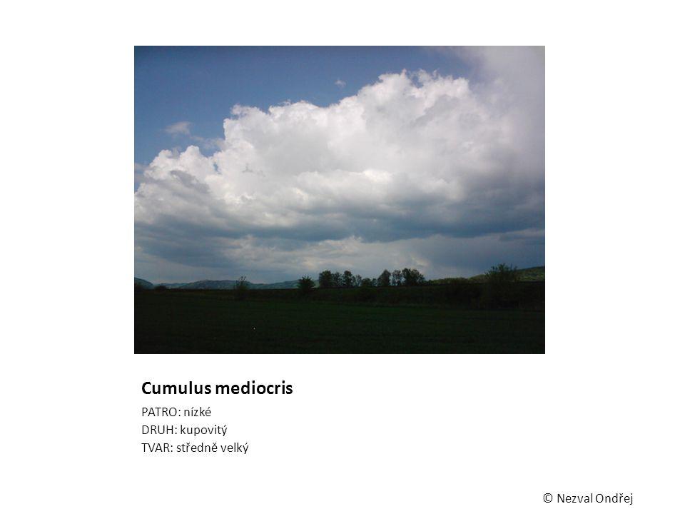 Cumulus mediocris PATRO: nízké DRUH: kupovitý TVAR: středně velký © Nezval Ondřej