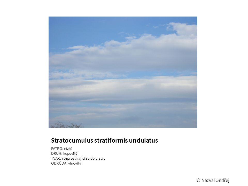 Stratocumulus stratiformis undulatus PATRO: nízké DRUH: kupovitý TVAR: rozprostírající se do vrstvy ODRŮDA: vlnovitý © Nezval Ondřej