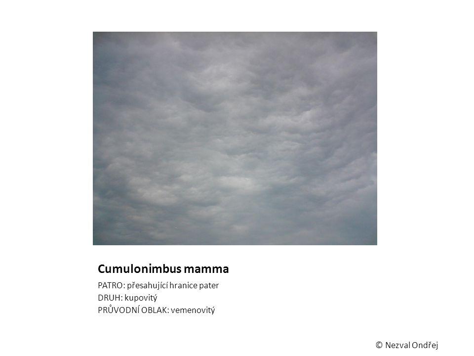 Cumulonimbus mamma PATRO: přesahující hranice pater DRUH: kupovitý PRŮVODNÍ OBLAK: vemenovitý © Nezval Ondřej