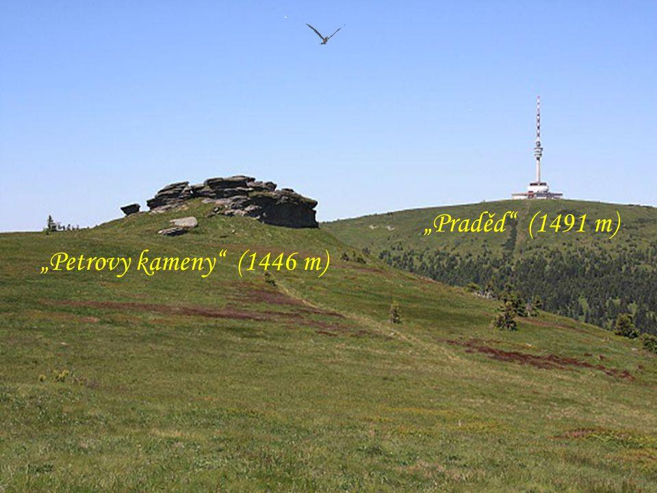 """Magistrálou, vrcholovou partií Jeseníků, směrem: Pecný – Ovčárna - Praděd """"Břidličná hora"""" (1358 m) """"Jelení studánka"""" (1311 m) Útulna u """"Jelení studán"""
