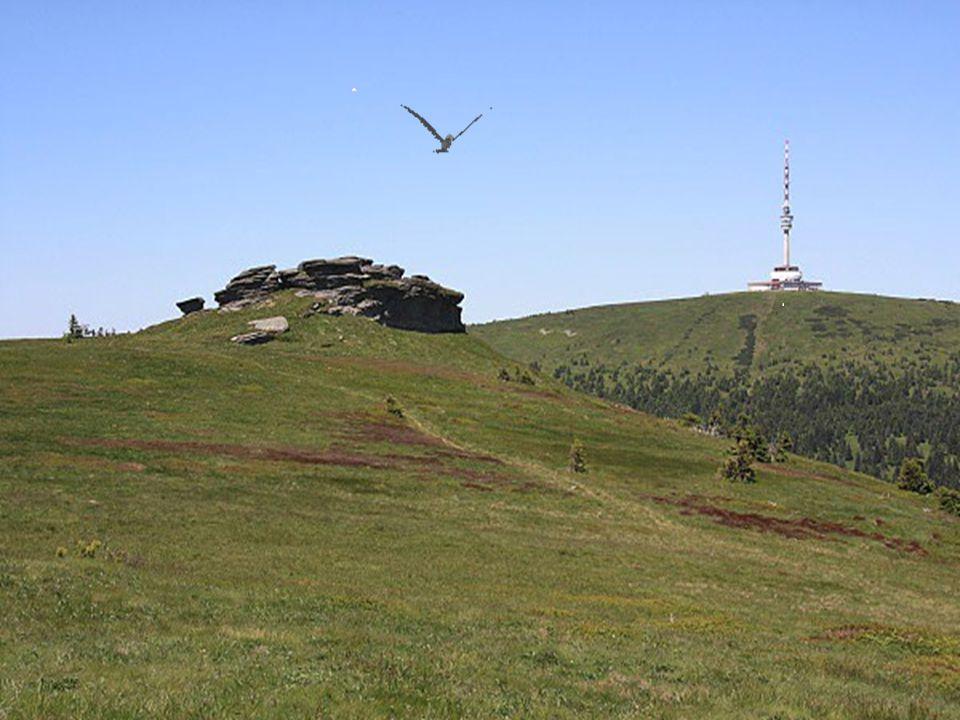 """Kosodřevina na """"Velkém Máji"""" (1385 m) """"Vysoká hole"""" (1464 m) - v zajetí mraku Horské drahokamy – """"Vysoká hole"""" """"Vysoká hole"""" - památka na II.svět. vál"""