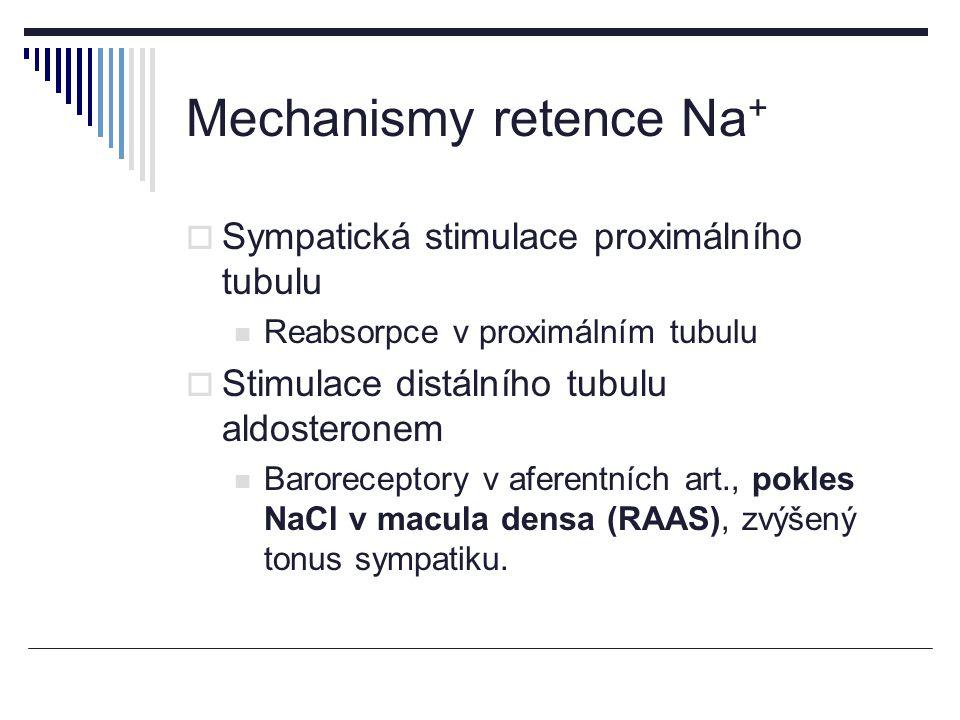 Mechanismy retence Na +  Sympatická stimulace proximálního tubulu Reabsorpce v proximálním tubulu  Stimulace distálního tubulu aldosteronem Baroreceptory v aferentních art., pokles NaCl v macula densa (RAAS), zvýšený tonus sympatiku.