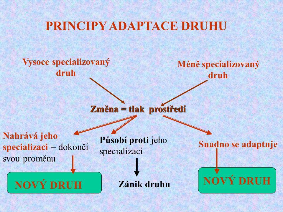 PRINCIPY ADAPTACE DRUHU Vysoce specializovaný druh Méně specializovaný druh Změna = tlak prostředí Nahrává jeho specializaci = dokončí svou proměnu NO