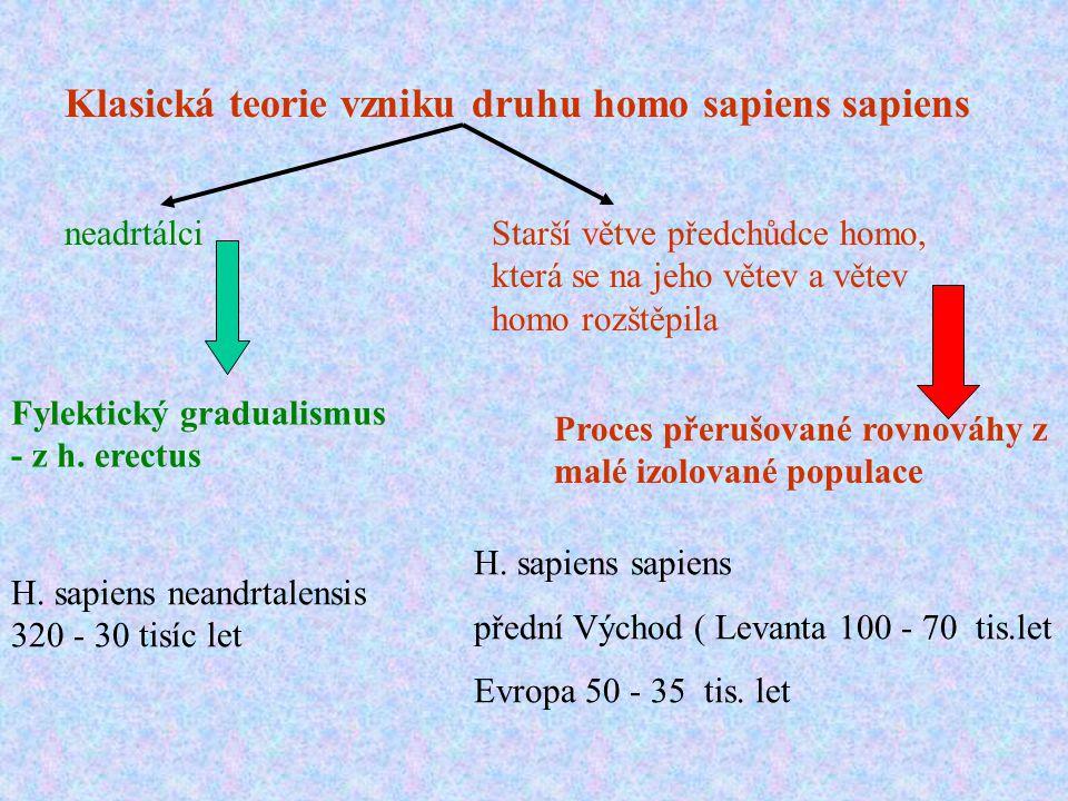 Klasická teorie vzniku druhu homo sapiens sapiens neadrtálciStarší větve předchůdce homo, která se na jeho větev a větev homo rozštěpila H. sapiens ne