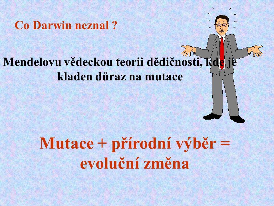 Co Darwin neznal ? Mendelovu vědeckou teorii dědičnosti, kde je kladen důraz na mutace Mutace + přírodní výběr = evoluční změna