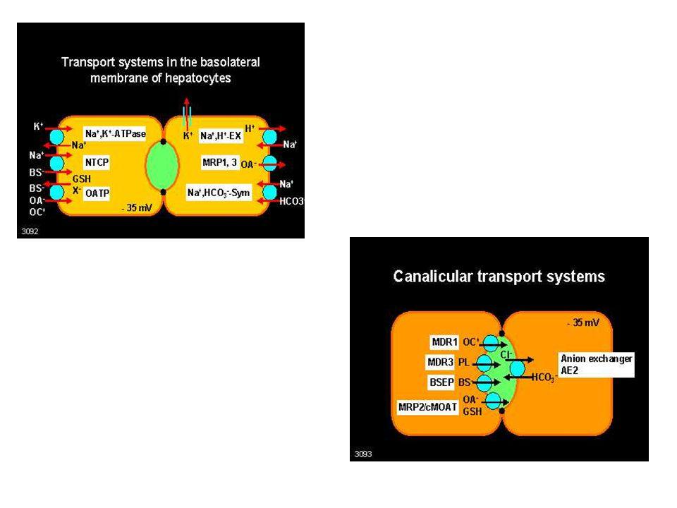 Bazolaterální membrána * sodíková pumpa * draslíkový kanál * se sodíkem spřažený transport (proton, bikarbonát) * NTCP – sodium-taurocholate cotranspo