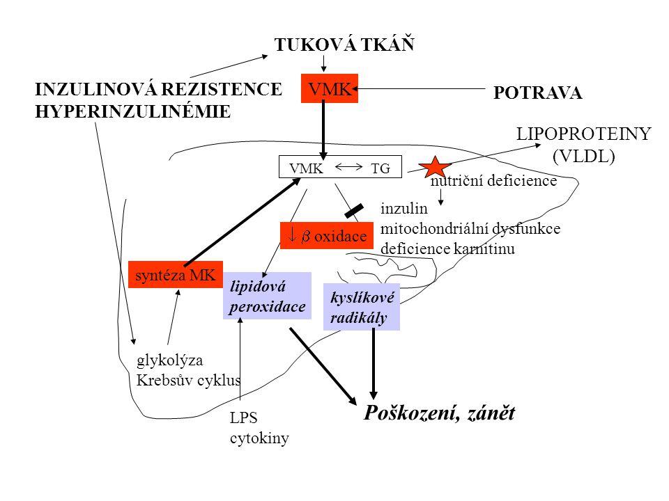 Jaterní steatóza, steatohepatitida Alkoholická * přísun energie * metabolické změny * indukce cytochromů * zvýšená produkce TNF  Nonalkoholická steat