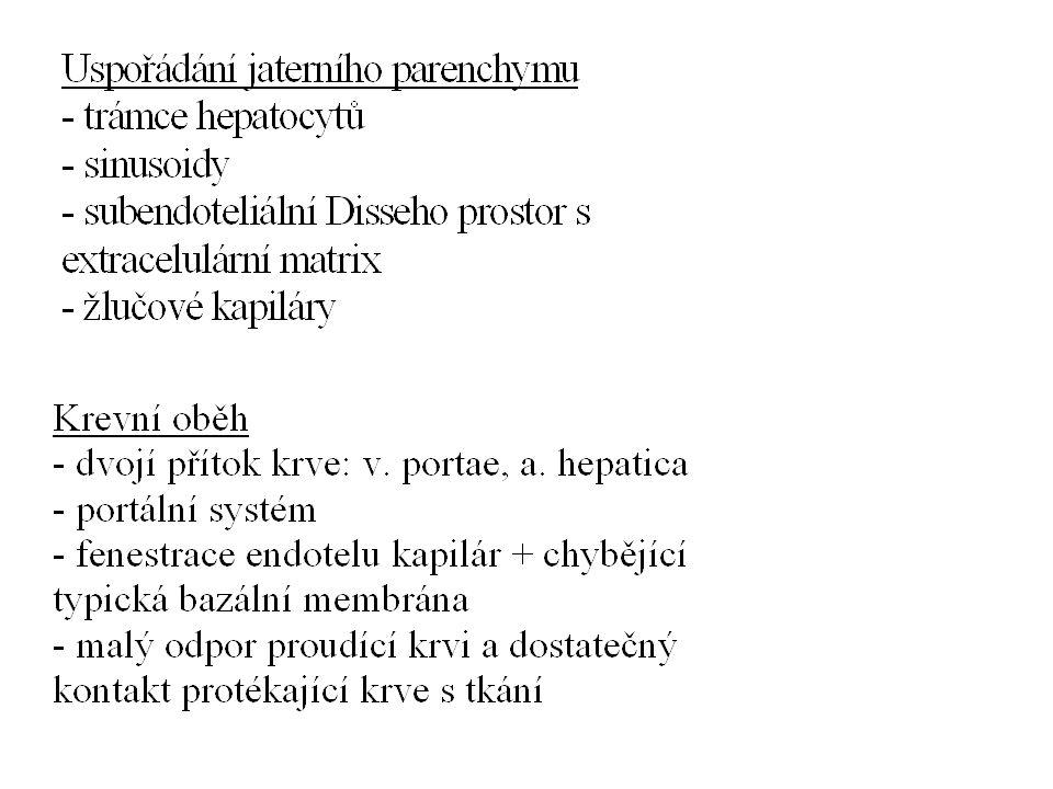 Jaterní steatóza, steatohepatitida Alkoholická * přísun energie * metabolické změny * indukce cytochromů * zvýšená produkce TNF  Nonalkoholická steatohepatitida (NASH) * inzulinová rezistence, obezita, DM 2.