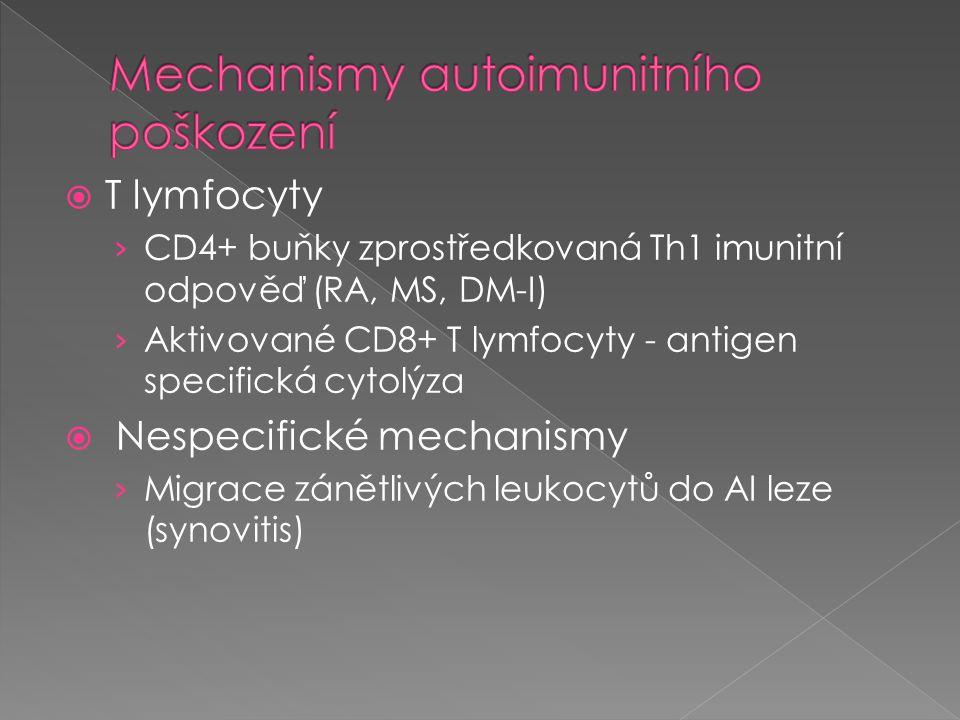  T lymfocyty › CD4+ buňky zprostředkovaná Th1 imunitní odpověď (RA, MS, DM-I) › Aktivované CD8+ T lymfocyty - antigen specifická cytolýza  Nespecifi