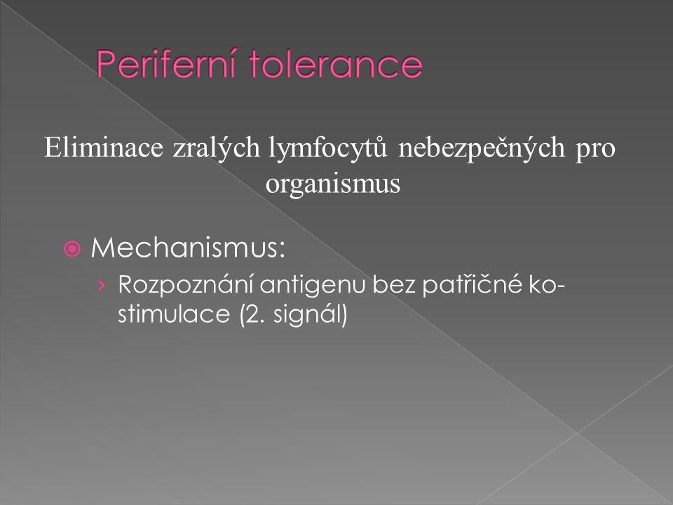  Mechanismus: › Rozpoznání antigenu bez patřičné ko- stimulace (2. signál) Eliminace zralých lymfocytů nebezpečných pro organismus